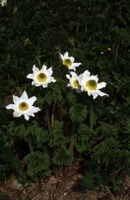 Photographie n°bb004126 du taxon