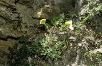 Photographie n°bb004627 du taxon