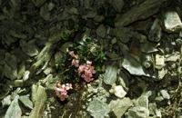 Photographie n°bb004810 du taxon