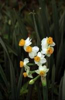 Photographie n°bb005642 du taxon
