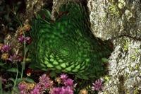 Photographie n°bb008846 du taxon