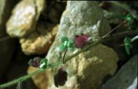 Photographie n°bb009333 du taxon