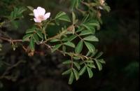 Photographie n°bb011759 du taxon