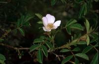 Photographie n°bb011761 du taxon