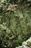 Photographie n°bb011840 du taxon