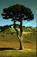 Photographie n°bb012497 du taxon