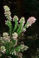 Photographie n°bb012636 du taxon