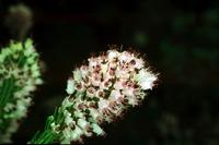 Photographie n°bb012637 du taxon