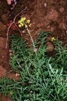 Photographie n°bb012712 du taxon
