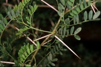 Photographie n°bb013027 du taxon