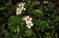 Photographie n°bb013133 du taxon