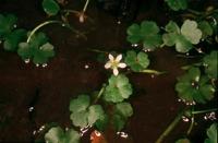 Photographie n°bb013487 du taxon