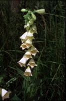 Photographie n°bb013659 du taxon