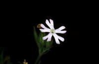 Photographie n°bb013969 du taxon