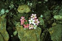 Photographie n°bb014222 du taxon