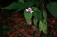 Photographie n°bb014352 du taxon