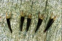 Photographie n°bb014503 du taxon