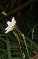 Photographie n°bb014788 du taxon