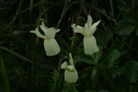 Photographie n°bb016036 du taxon