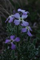 Photographie n°bb016441 du taxon