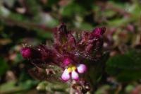 Photographie n°bb016488 du taxon