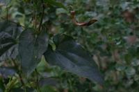 Photographie n°bb016568 du taxon
