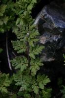 Photographie n°bb016591 du taxon