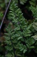 Photographie n°bb016602 du taxon