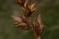 Photographie n°bb017541 du taxon