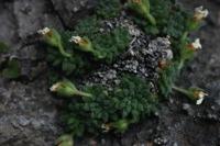 Photographie n°bb018010 du taxon