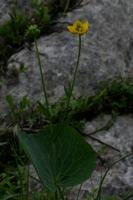Photographie n°bb018073 du taxon