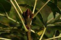 Photographie n°bb018811 du taxon