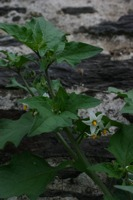 Photographie n°bb018873 du taxon