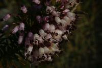Photographie n°bb019023 du taxon