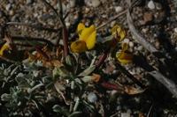 Photographie n°bb019746 du taxon