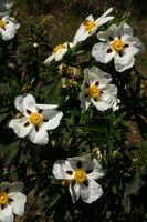 Photographie n°bb019888 du taxon
