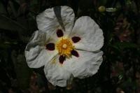 Photographie n°bb019892 du taxon