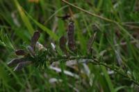 Photographie n°bb020144 du taxon