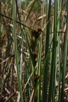 Photographie n°bb020201 du taxon