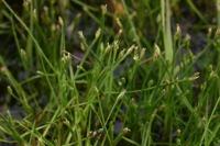 Photographie n°bb020520 du taxon