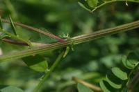 Photographie n°bb020719 du taxon