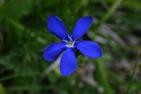Photographie n°bb021052 du taxon