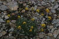 Photographie n°bb021101 du taxon
