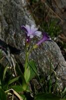 Photographie n°bb021262 du taxon