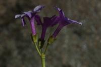 Photographie n°bb021264 du taxon