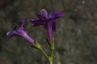 Photographie n°bb021265 du taxon