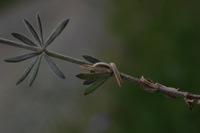 Photographie n°bb021316 du taxon