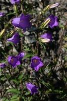 Photographie n°bb021484 du taxon