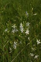 Photographie n°bb021534 du taxon