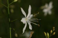 Photographie n°bb021537 du taxon